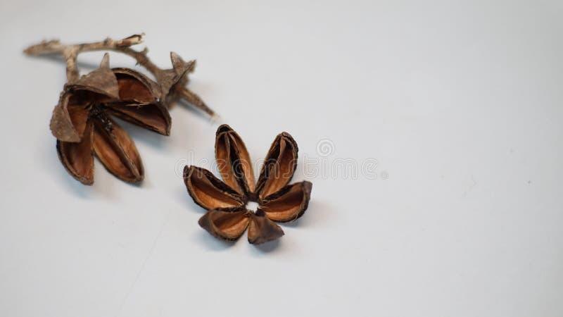 Fondo de la flor de Brown foto de archivo libre de regalías