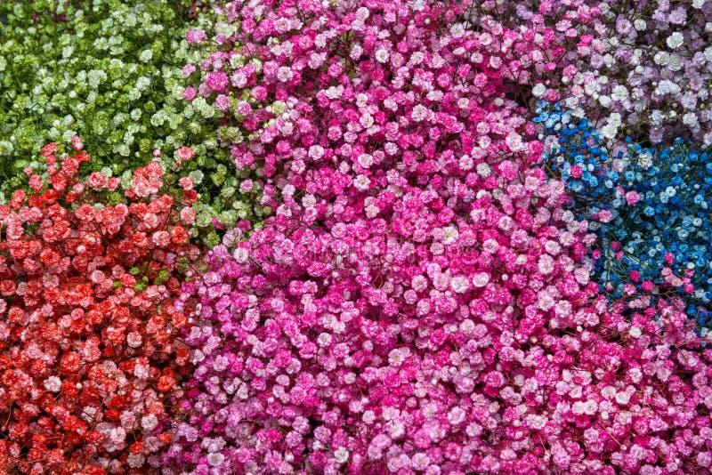 Download Fondo De La Flor Del Gypsophila Foto de archivo - Imagen de imagen, color: 44855710