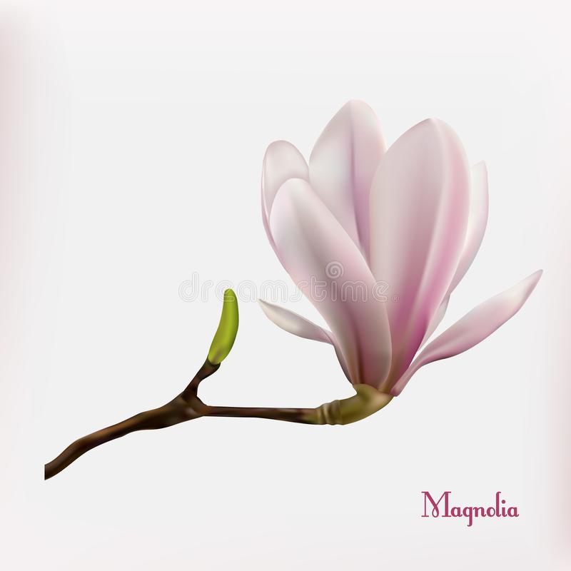 Fondo de la flor de la magnolia fotos de archivo