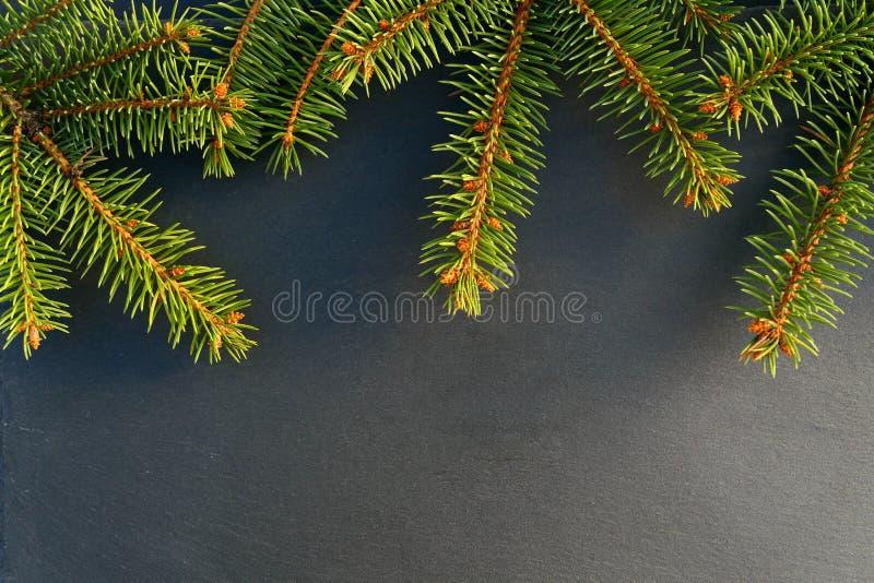 Fondo de la frontera de las ramas de la picea de la Navidad fotografía de archivo