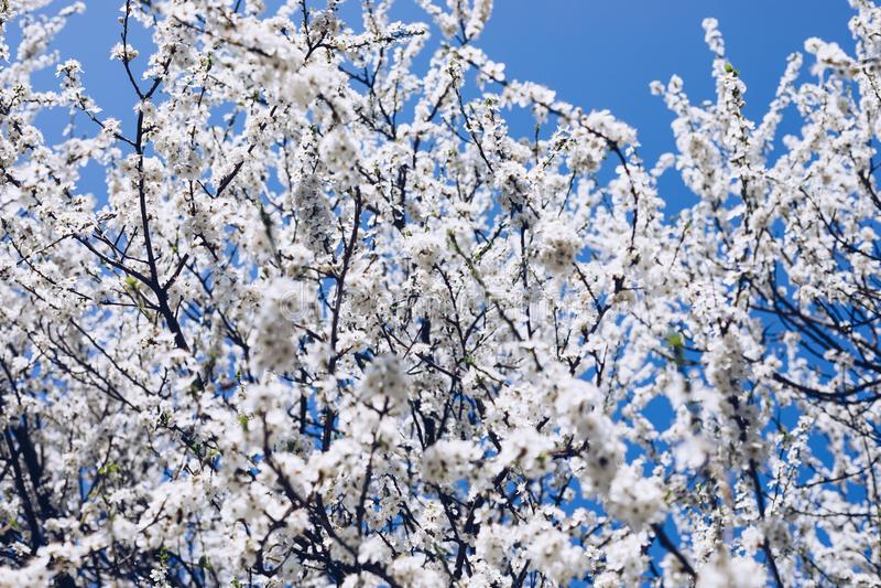 Fondo de la frontera de la primavera con el flor, primer Floral abstracto imágenes de archivo libres de regalías