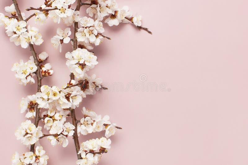 Fondo de la frontera de la primavera con las ramas florecientes blancas hermosas El fondo rosado en colores pastel, florece las f imagen de archivo