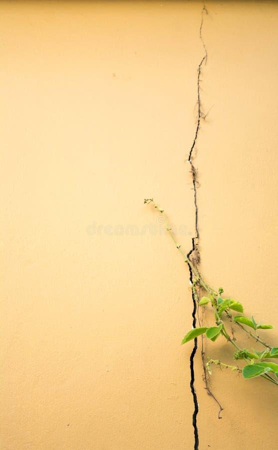 fondo de la grieta de la pared fotos de archivo