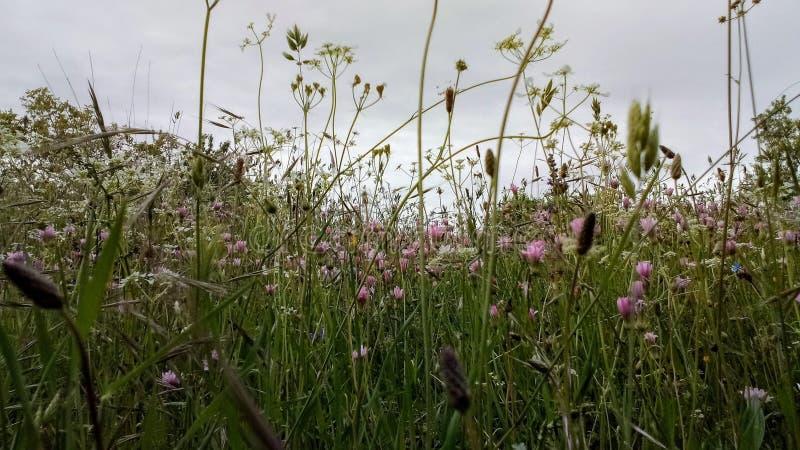 Fondo de la hierba de la primavera con las flores y la hierba foto de archivo libre de regalías