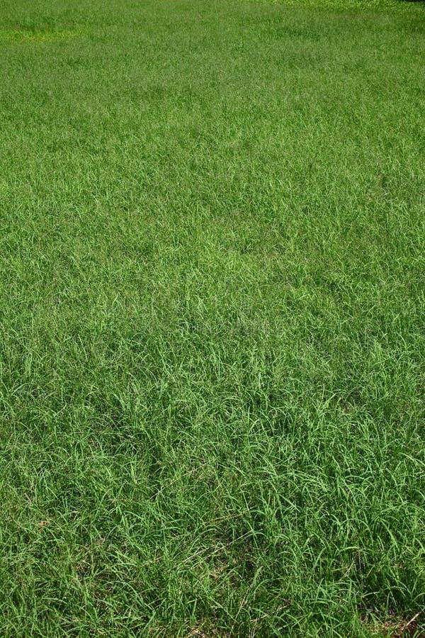 Fondo de la hierba verde fotos de archivo libres de regalías