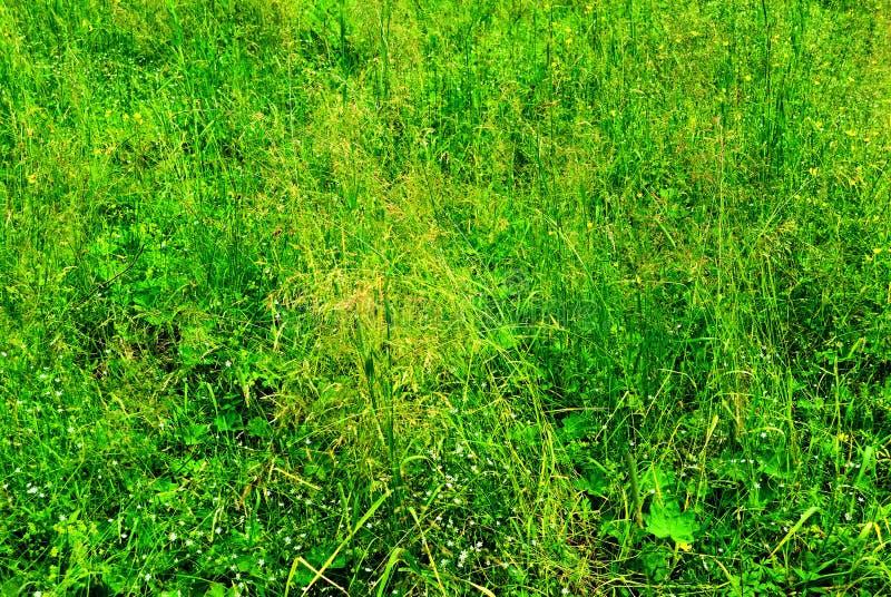 Download Fondo de la hierba verde imagen de archivo. Imagen de verano - 44854717