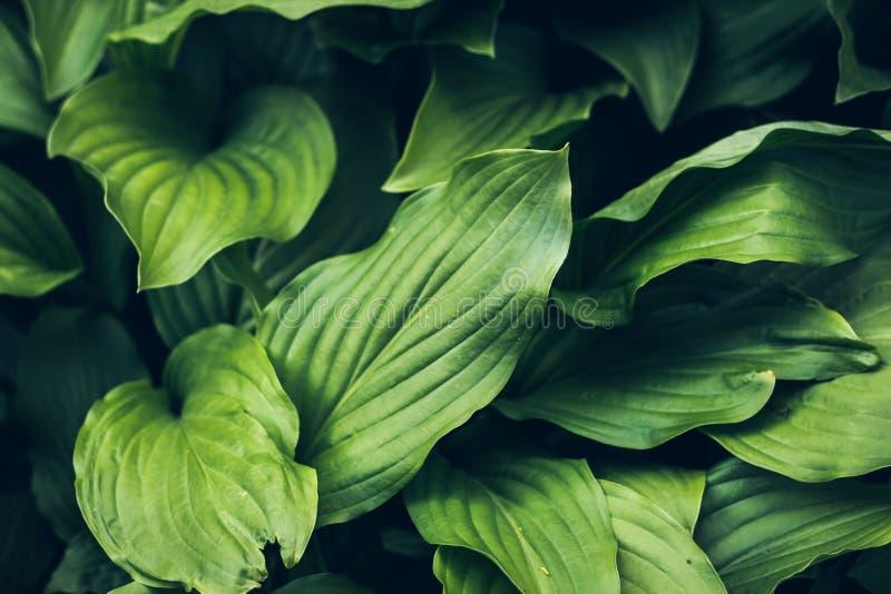Fondo de la hierba verde brillante viva plantsBeautiful texturizada verde Verdor puro, agradable, agradable fotografía de archivo libre de regalías