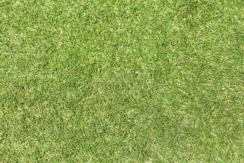 Fondo de la hierba verde del campo. fotografía de archivo libre de regalías