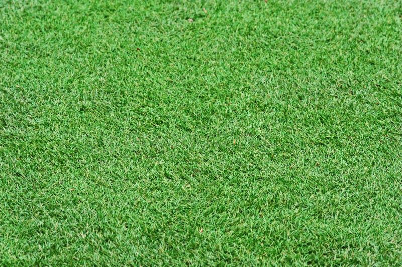 Fondo de la hierba verde del campo imagenes de archivo