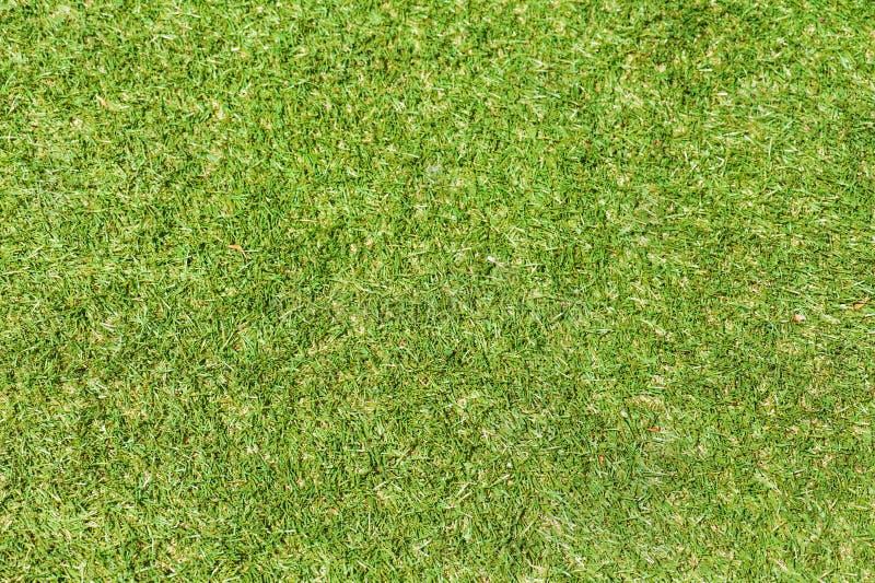 Fondo de la hierba verde del campo imagen de archivo