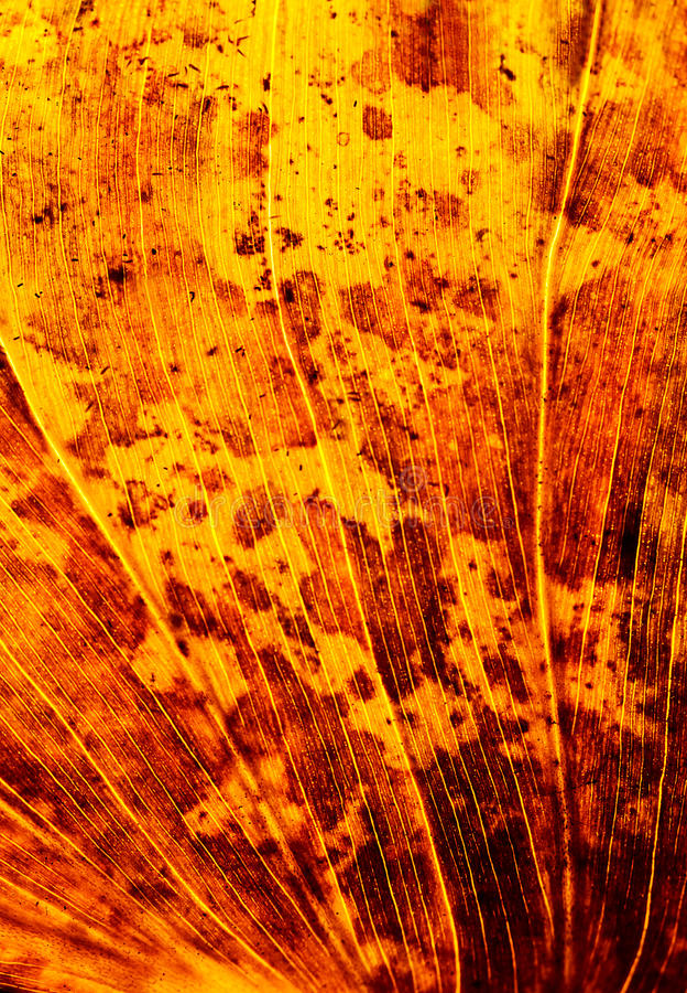 Fondo de la hoja del otoño foto de archivo