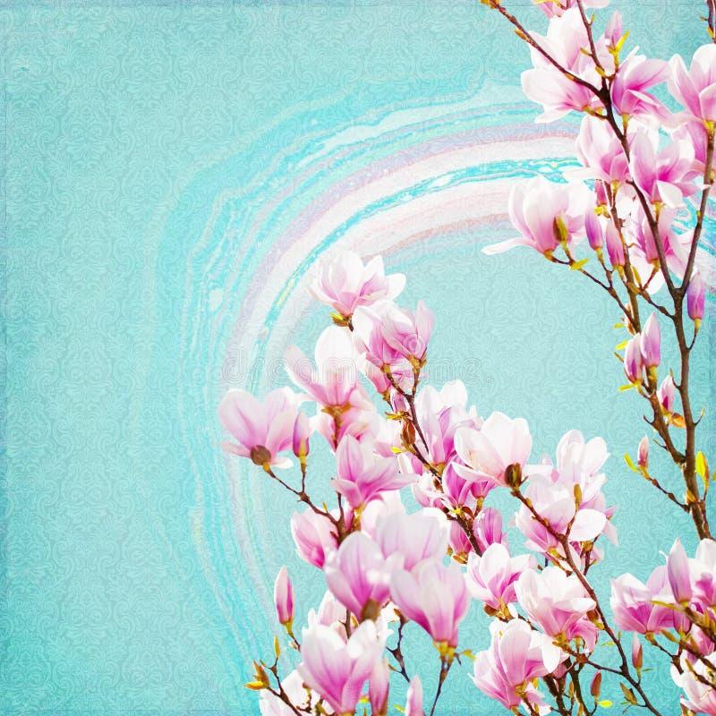 Fondo de la magnolia ilustración del vector