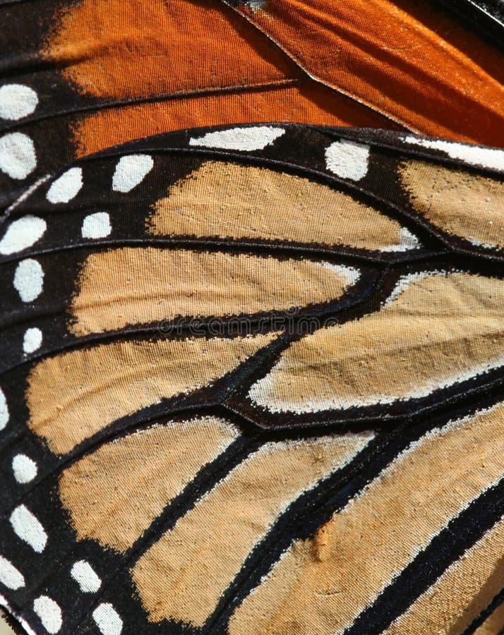 Fondo de la mariposa fotografía de archivo