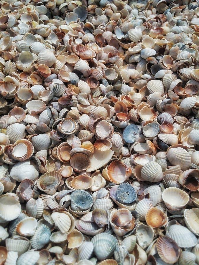 Fondo de la mezcla de las conchas marinas imagen de archivo
