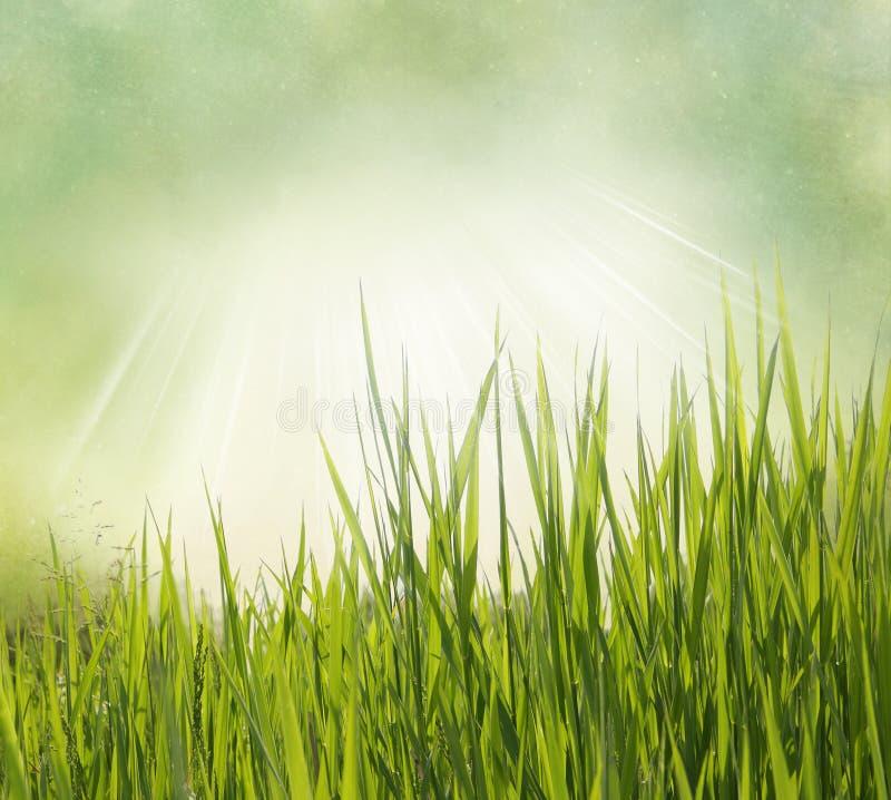 Fondo de la naturaleza con la hierba imagen de archivo