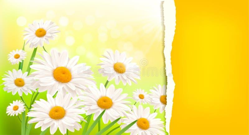Fondo de la naturaleza con la margarita fresca ilustración del vector