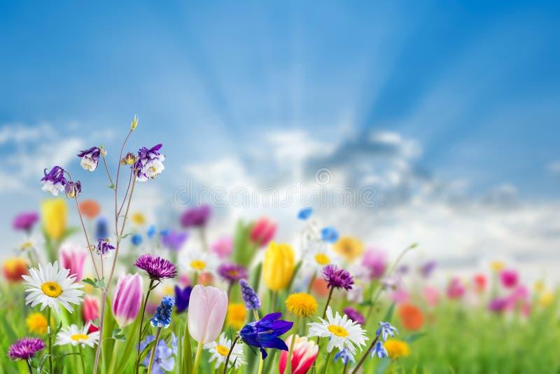 Fondo de la naturaleza con las flores salvajes fotografía de archivo libre de regalías