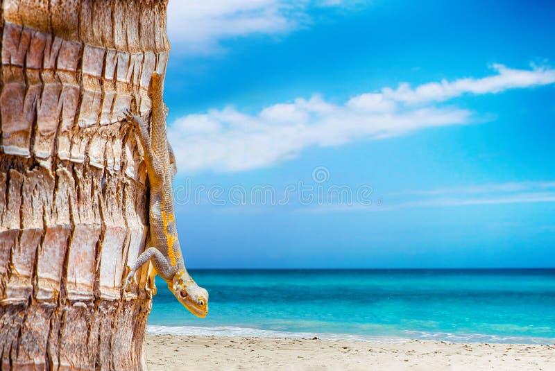 Fondo de la naturaleza con la playa blanca y el mar claro Hay una palmera en ella y Agama en él Es un paraíso tropical imagen de archivo libre de regalías