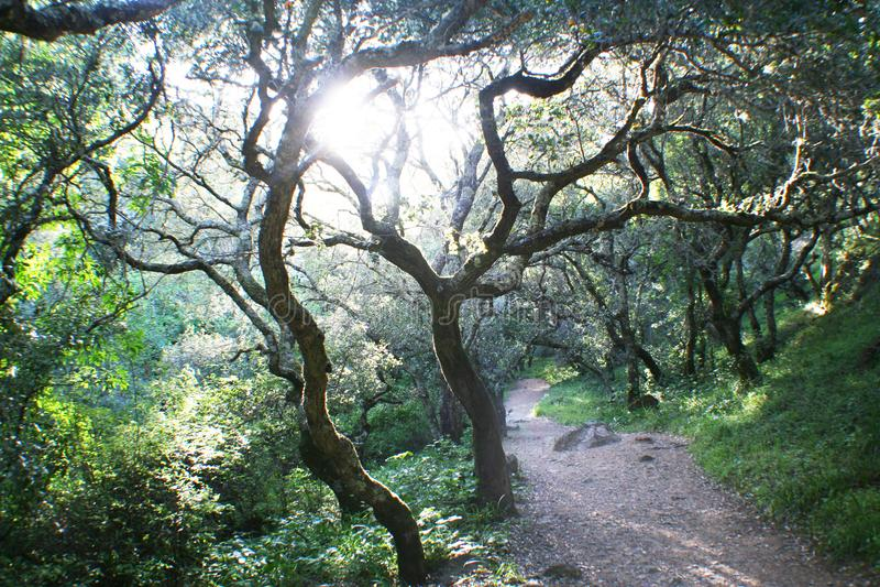Fondo de la naturaleza con Tress High Quality magnífica imagen de archivo