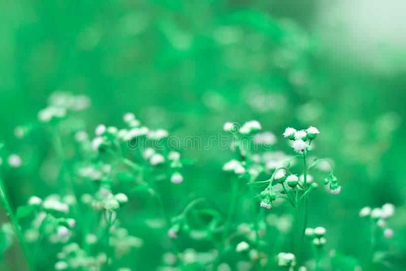 Fondo de la naturaleza de la flor fotografía de archivo