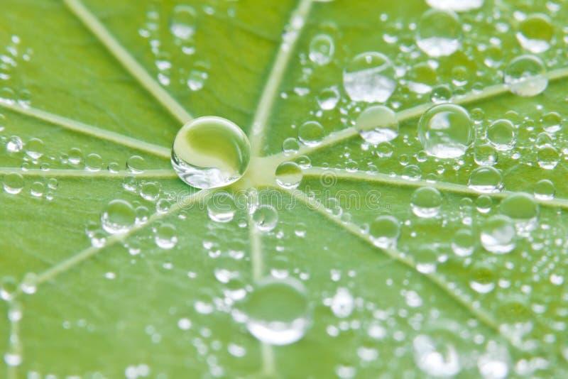 Fondo de la naturaleza de la textura del agua de la hoja foto de archivo libre de regalías