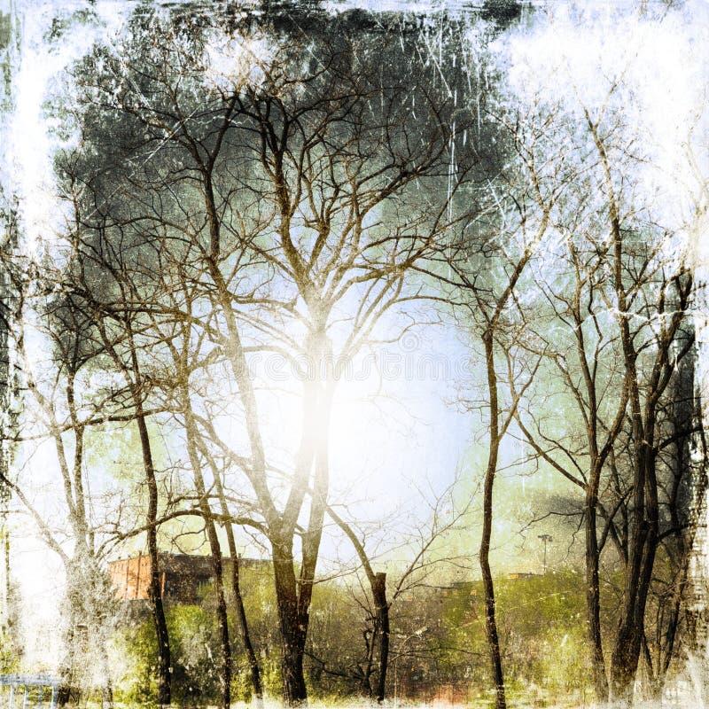 Fondo de la naturaleza del Grunge con los árboles desnudos imagen de archivo