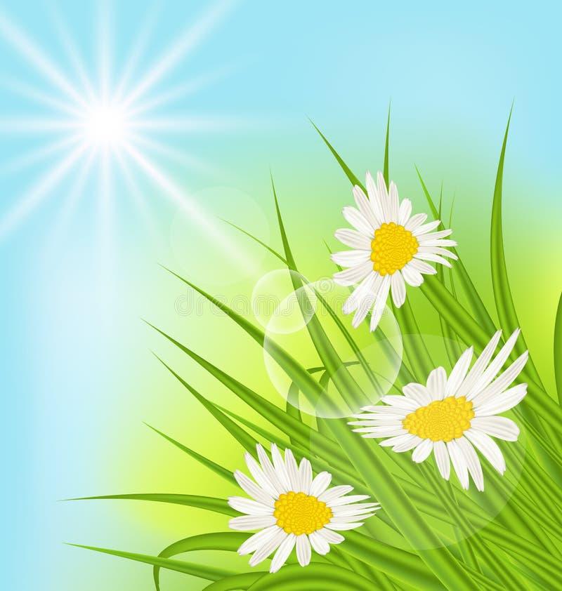Fondo de la naturaleza del verano con la margarita, hierba, cielo azul, rayos soleados stock de ilustración