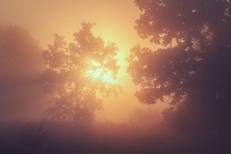 Fondo de la naturaleza del verano de la salida del sol amarilla en mañana de niebla Paisaje del verano de la naturaleza salvaje C imagenes de archivo