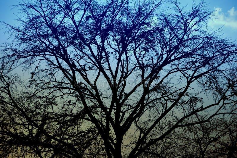 Fondo de la naturaleza y fotografía del outdoour y de la puesta del sol foto de archivo libre de regalías