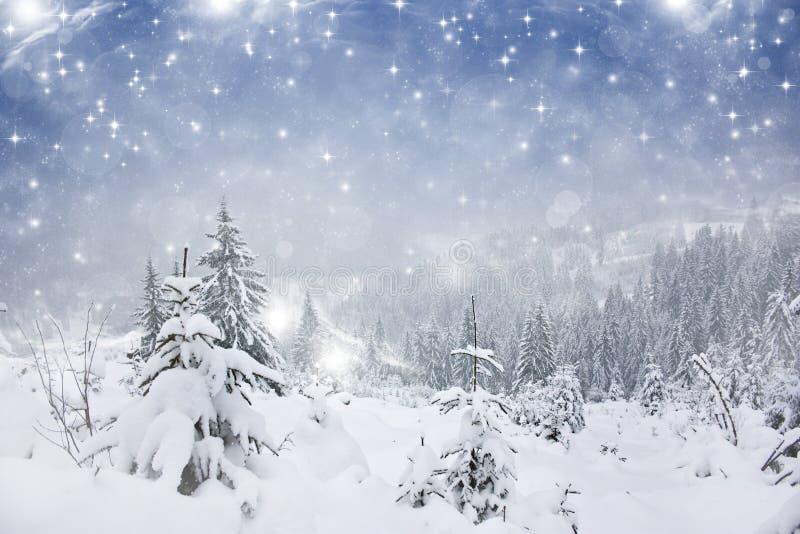 Fondo de la Navidad con las estrellas y los abetos nevosos imagenes de archivo