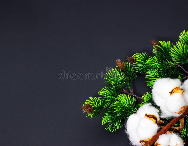 Fondo de la Navidad con las ramas del pino y espacio del algodón para el texto imágenes de archivo libres de regalías