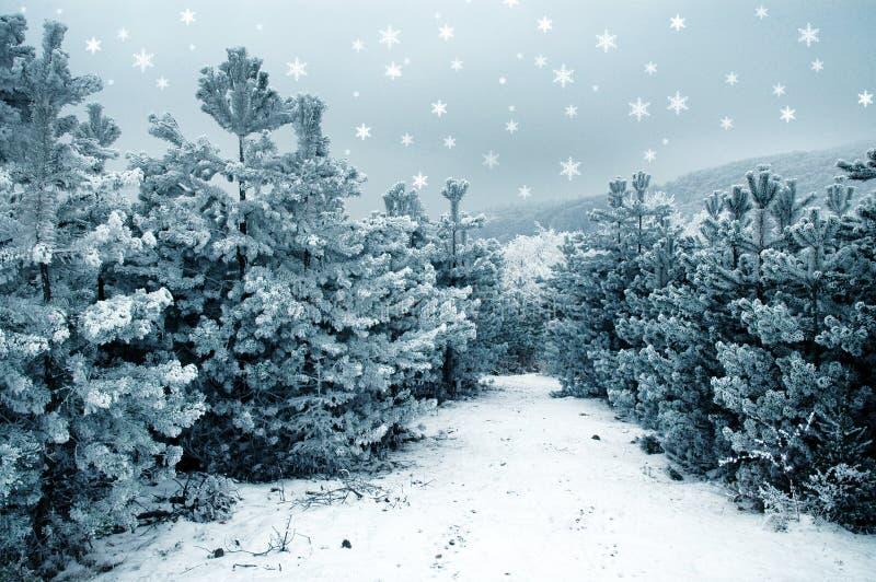 Fondo de la Navidad con los abetos nevosos fotos de archivo