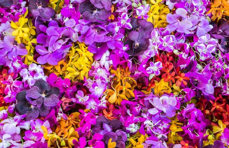 Fondo de la orquídea fotografía de archivo
