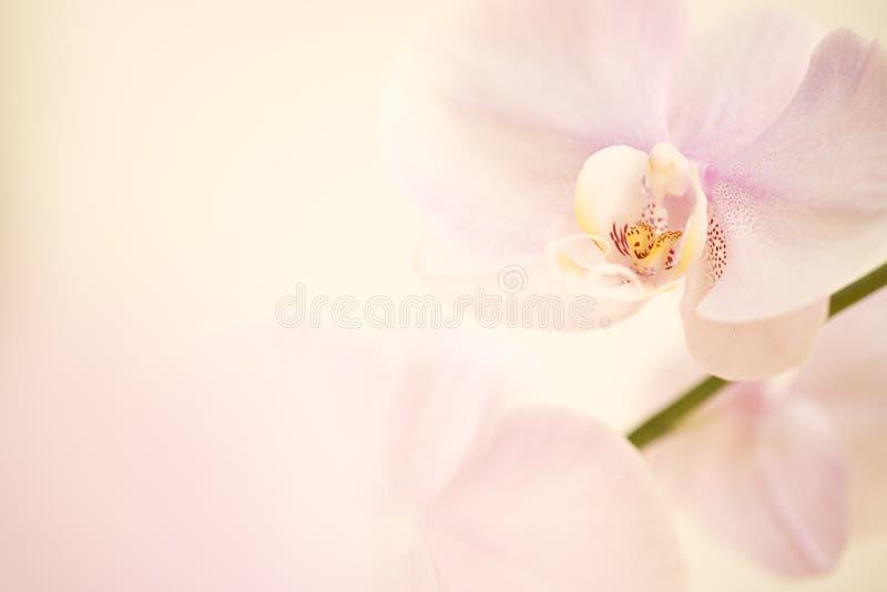 Fondo de la orquídea imagen de archivo libre de regalías