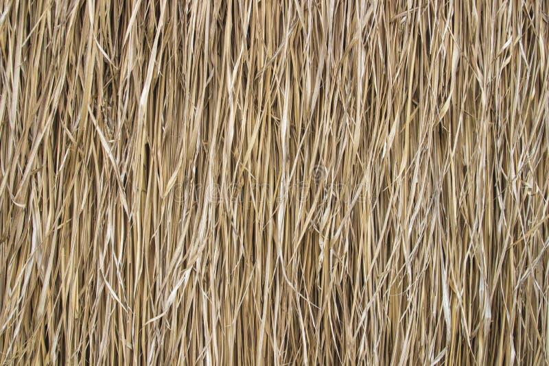 Download Fondo de la paja del arroz imagen de archivo. Imagen de rancho - 42435561