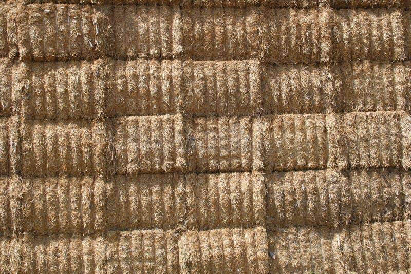 Fondo 3 de la paja del trigo imagen de archivo