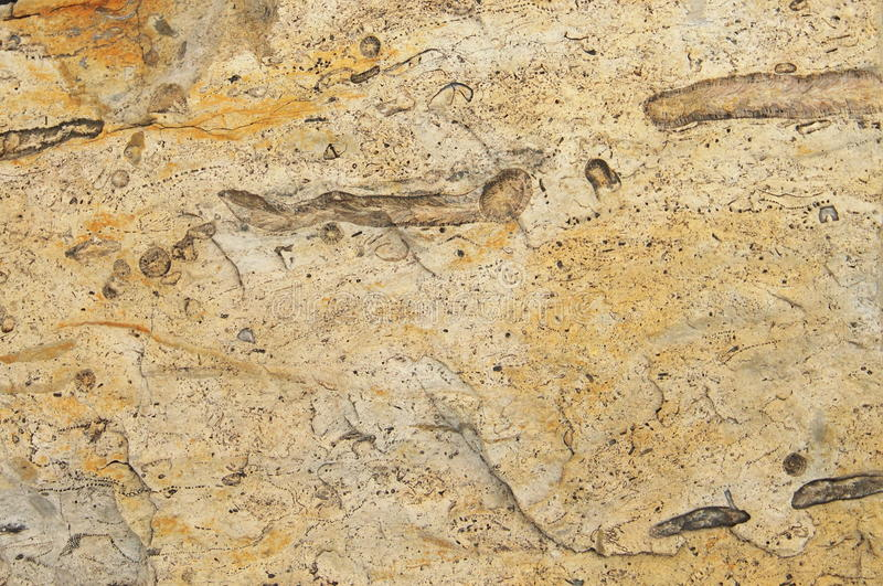 Fondo de la paleontología de las rocas de Spitsbergen fotografía de archivo libre de regalías