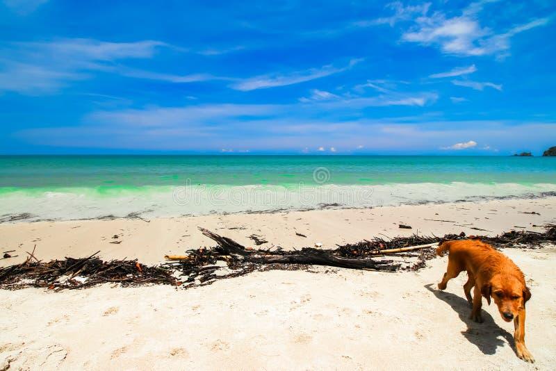 Fondo de la playa de la arena de la naturaleza imagen de archivo libre de regalías