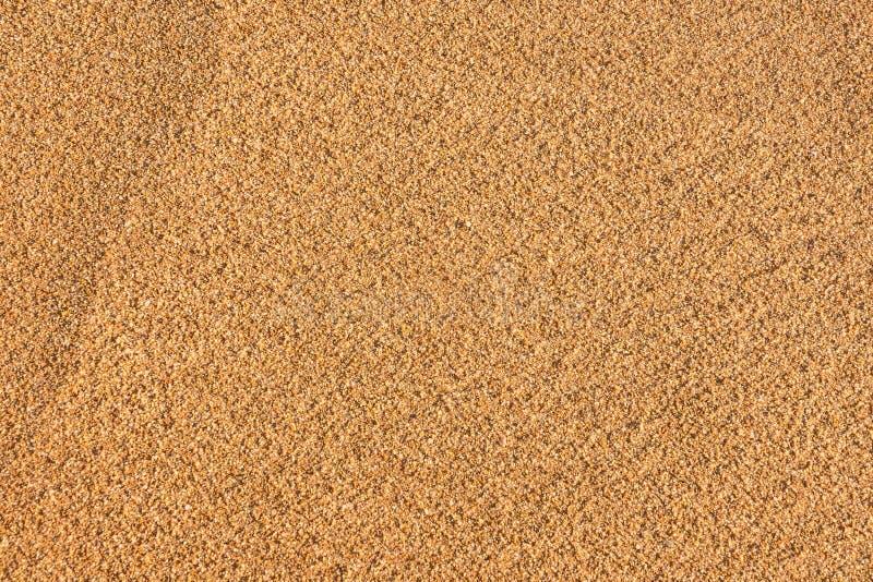 Fondo de la playa de Sandy y textura detallada de la arena foto de archivo