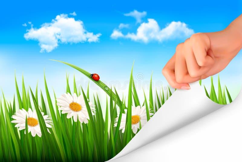 Fondo de la primavera con el cielo, flores, hierba stock de ilustración
