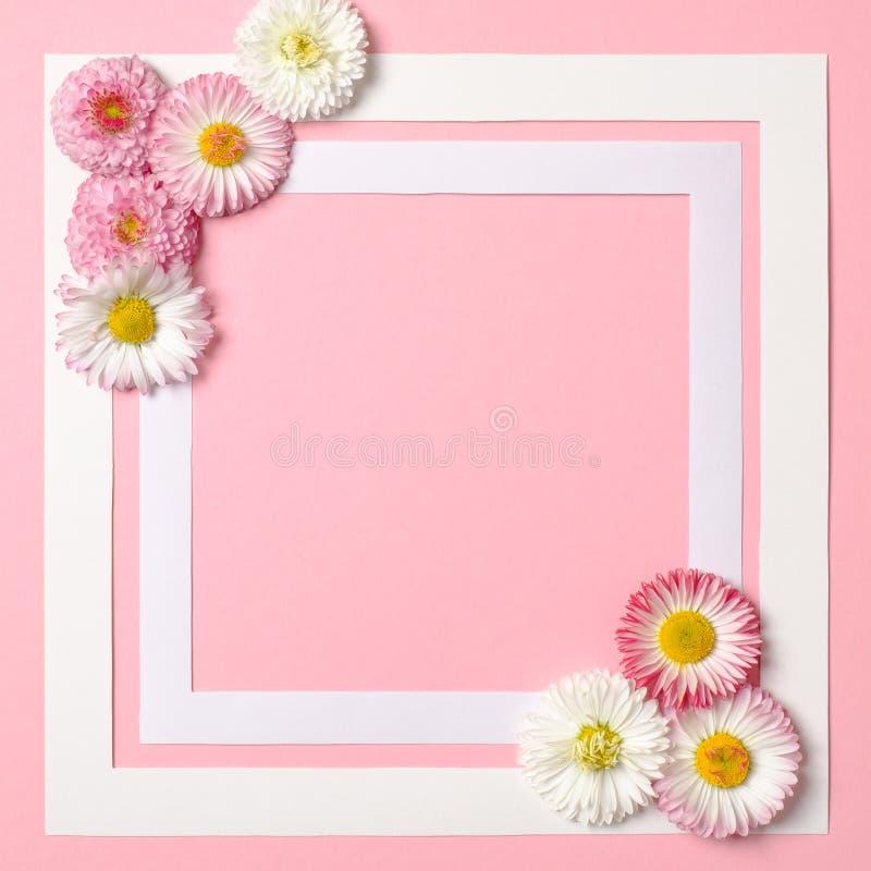 Fondo de la primavera con las flores del marco y de la margarita de la frontera en esquinas Plantilla para las ventas de la prima imagenes de archivo