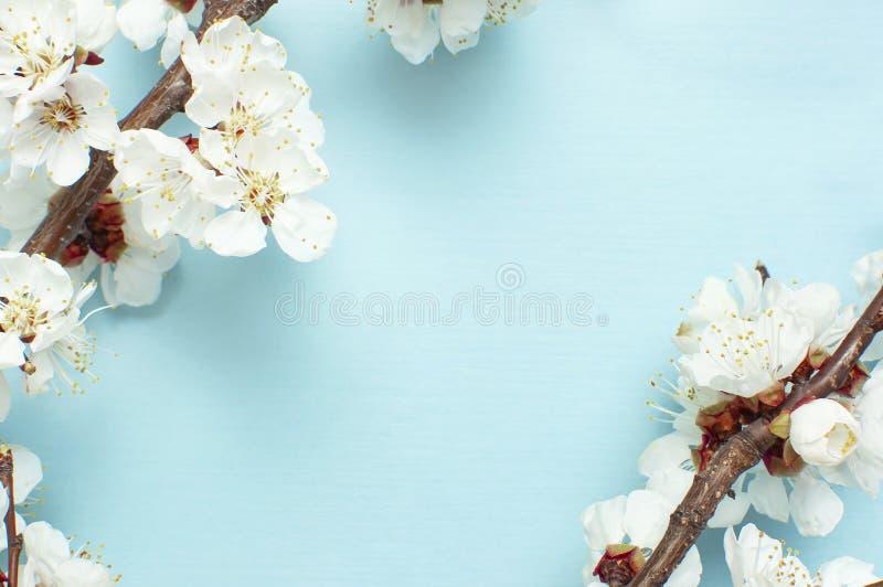 Fondo de la primavera con las ramas florecientes blancas hermosas El fondo azul en colores pastel de la naturaleza, florece las f imagenes de archivo