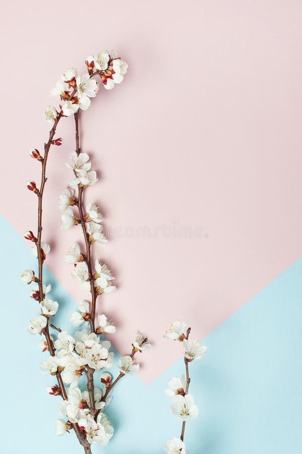 Fondo de la primavera con las ramas florecientes blancas hermosas El fondo azul rosado en colores pastel de la naturaleza, florec fotos de archivo libres de regalías