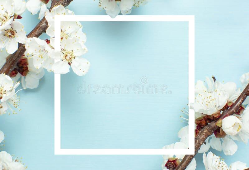 Fondo de la primavera con las ramas florecientes blancas hermosas y el marco blanco El fondo azul en colores pastel de la natural fotos de archivo libres de regalías