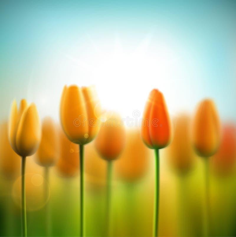 Fondo de la primavera con los tulipanes stock de ilustración