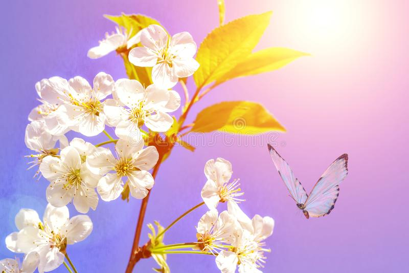 Fondo de la primavera del flor de la almendra La oferta rosada hermosa de la primavera florece el flor Primer rosado de la flor d imágenes de archivo libres de regalías