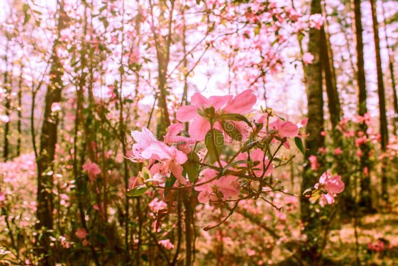 Fondo de la primavera de flores florecientes Flores blancas y rosadas Escena hermosa de la naturaleza con un ?rbol floreciente Ap imagen de archivo libre de regalías