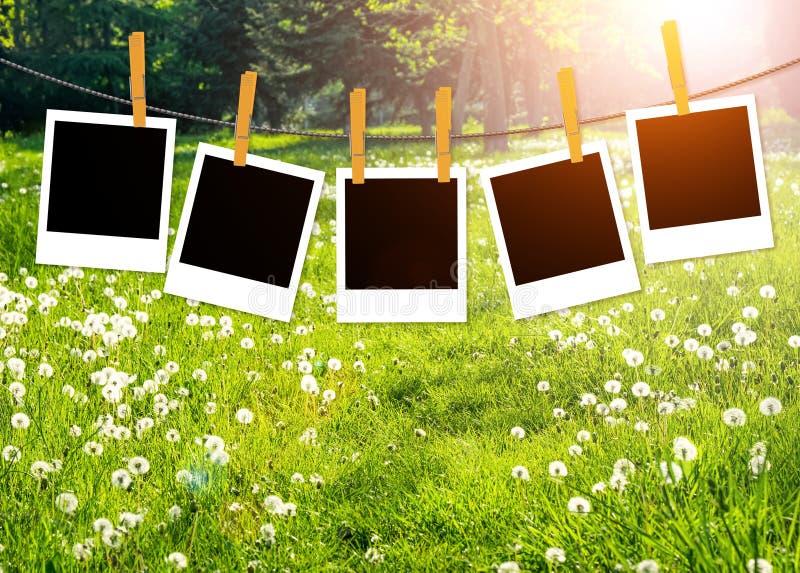 Fondo de la primavera o de la naturaleza del verano con los espacios en blanco de la foto en el paño fotografía de archivo