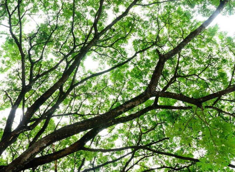 Fondo de la rama de árbol imagen de archivo