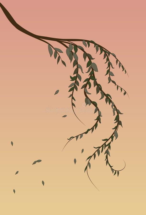 Fondo de la ramificación de árbol de sauce que llora stock de ilustración